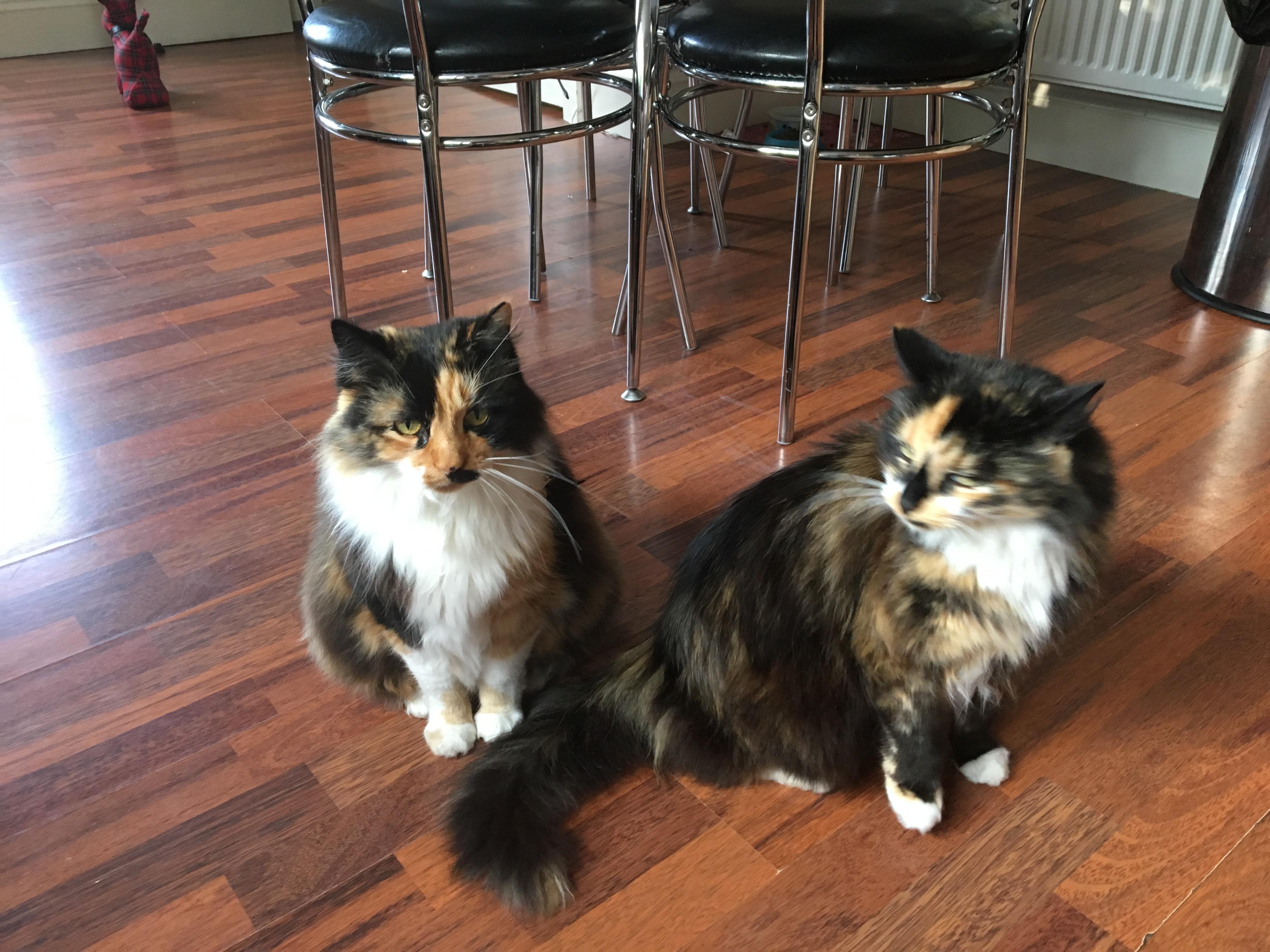 Rosie & Ruby