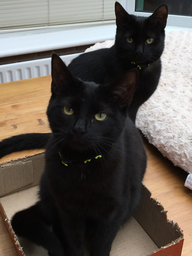 Beatie & Boo