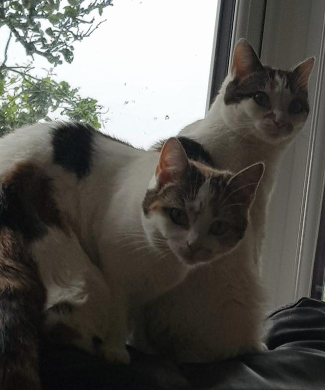 Maud & Lily
